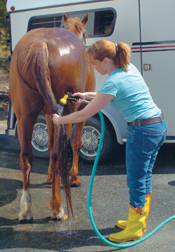 Equestrian Blog | Give your horse a Spring clean!